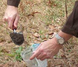 A soil test for a home vegetable garden