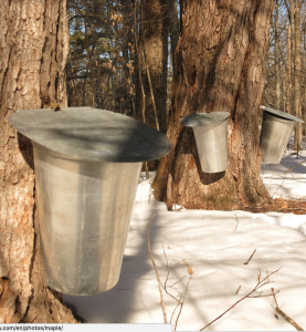 Maple syrup is not a climate-proof food.